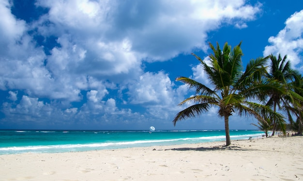 Caribisch strand en palmboom .paradise. vakantie en toerisme concept.