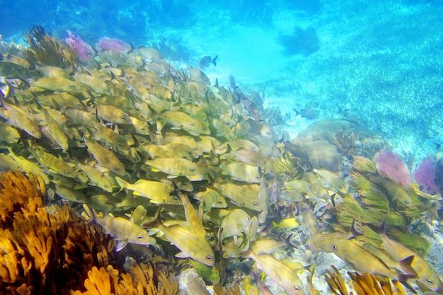 Caribische rif grunt visschool mayan riviera