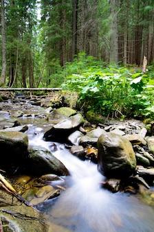 Cascades op een duidelijke kreek in een bos
