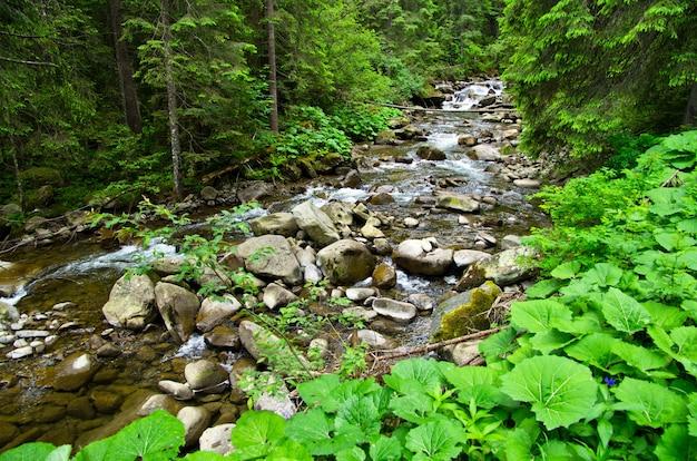 Cascades op een heldere kreek in een bos