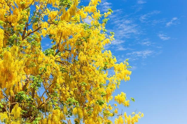 Cassia fistula bij park binnen op blauwe hemel in thailand.