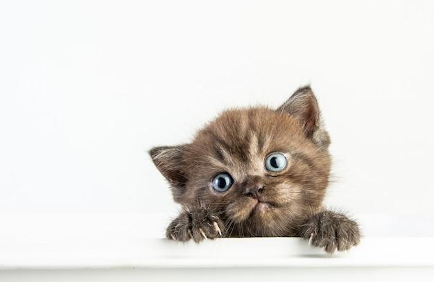 Cat baby tabby kitten cute
