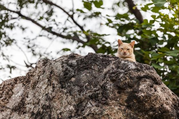 Cat is aan het kijken
