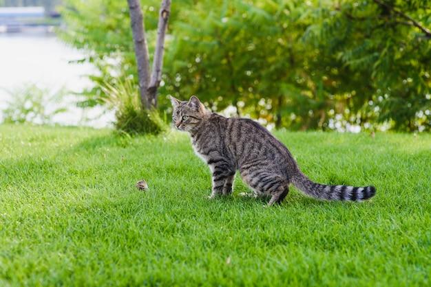 Cat ving een muis