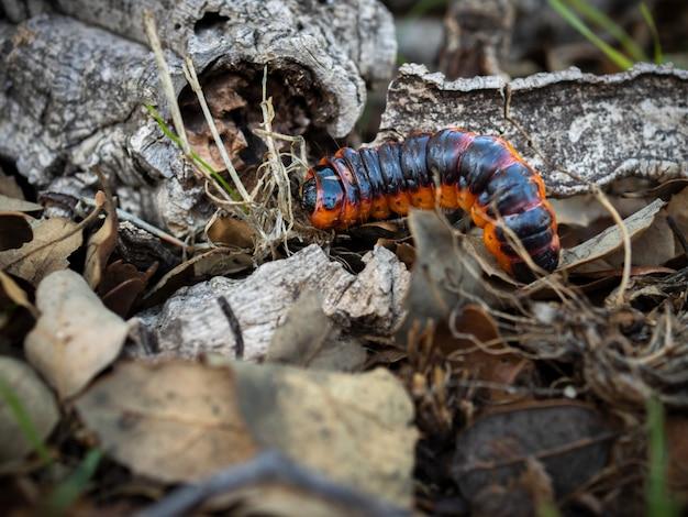Caterpillar in zijn natuurlijke omgeving.