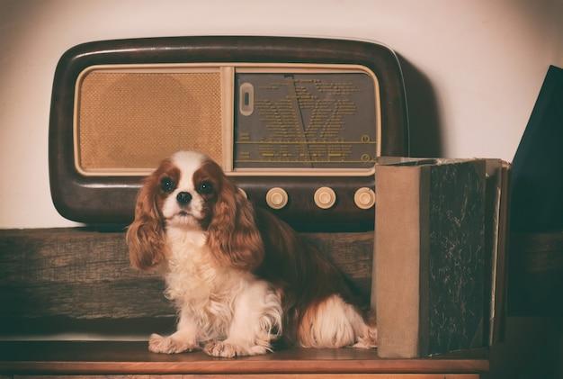 Cavalier king-hond dichtbij een oude radio.