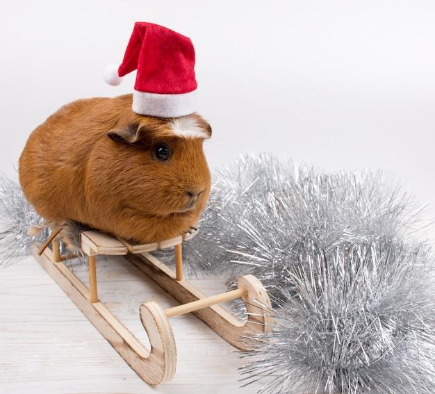 Caviazitting op een stuk speelgoed kerstslee