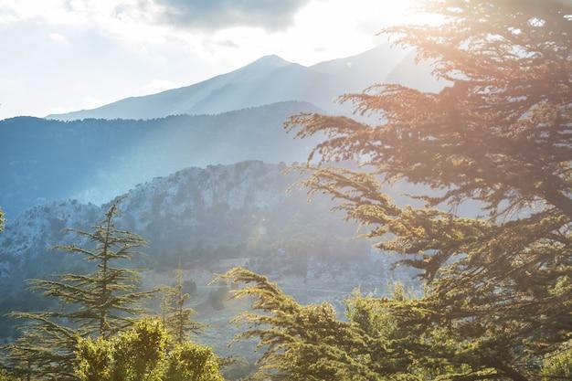 Cederbomen in de bergen, turkije