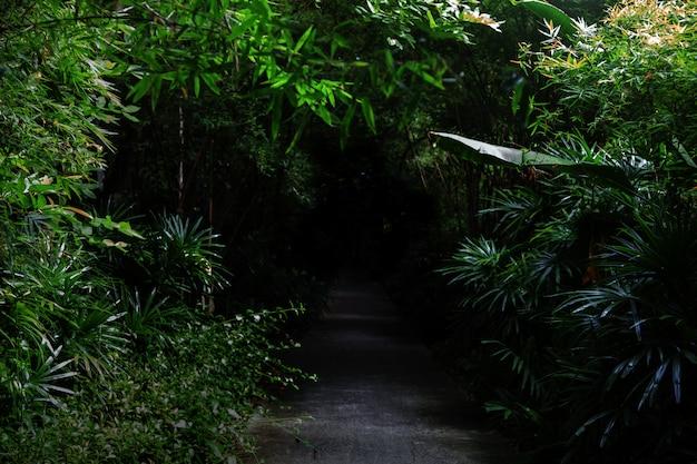 Cement loopbrug naar donker bos voor natuur mysterie