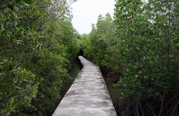 Cement loopbrug op mangrovebos in openbaar natuurpark in thailand