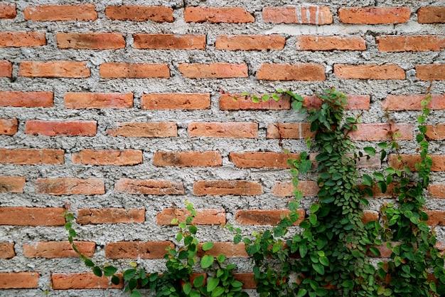 Cementbakstenen muur van een verouderd gebouw met groeiende groene planten