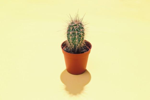 Centrale compositie met een enkele groenblijvende succulente cactus in bruine bloempot een harde schaduw op een gele achtergrond