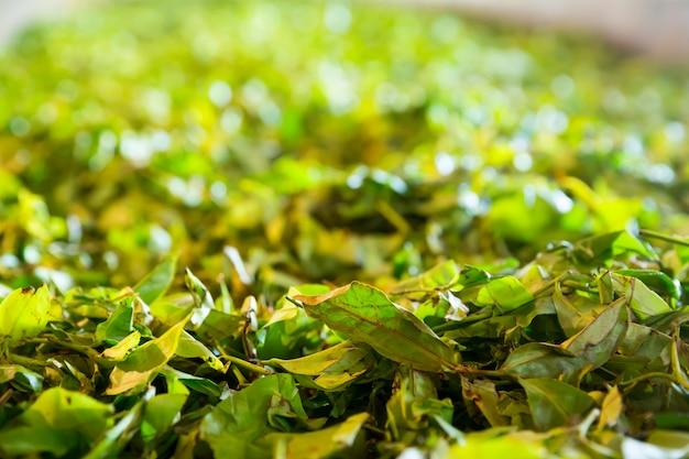 Ceylon theestruiken, groene plantages van sri lanka