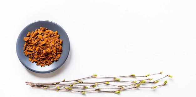 Chaga paddenstoel. samenstelling van stukjes berkenschimmel chaga in kom of plaat en berkentakjes met knoppenisolatie op witte achtergrond. concept van alternatieve geneeskunde. banner