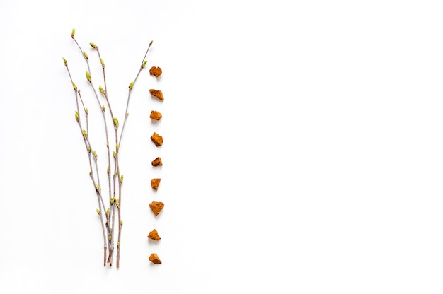 Chaga paddenstoel. samenstelling van stukken berkenschimmel chaga en berkentakjes met knoppenisolatie op witte achtergrond.