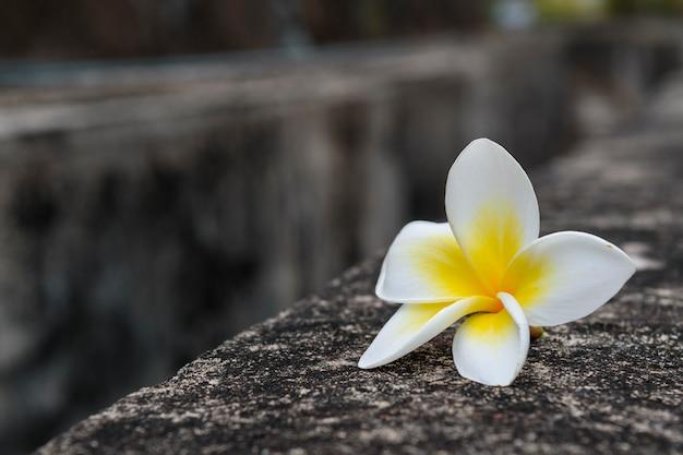 Champa bloem