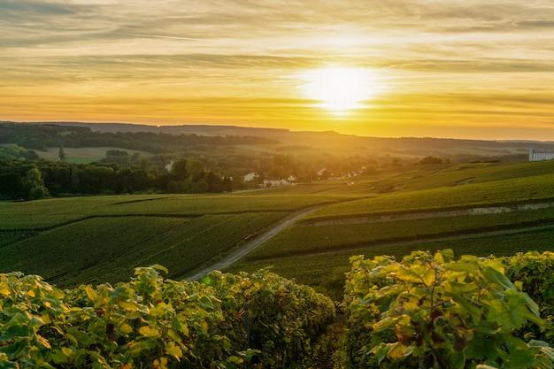 Champagne-wijngaarden bij zonsondergang montagne de reims, frankrijk