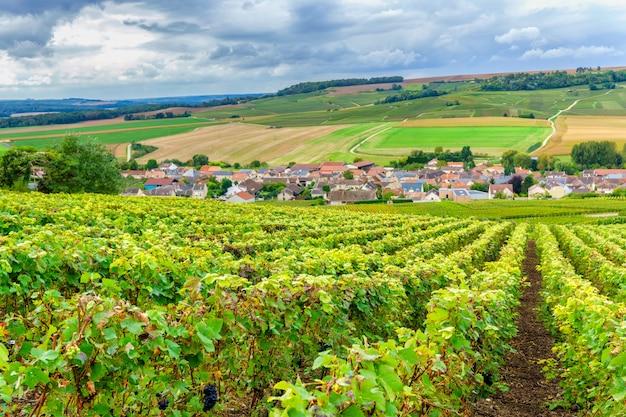 Champagne-wijngaarden bij zonsondergang, montagne de reims, frankrijk