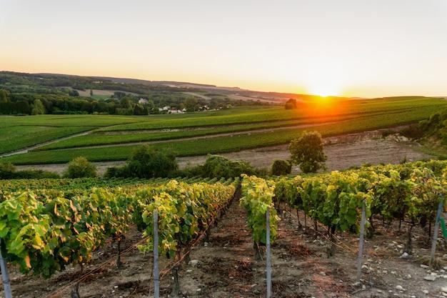 Champagne-wijngaarden in montagne de reims