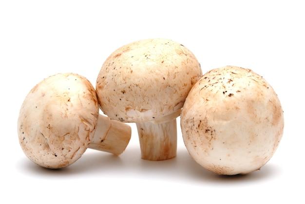 Champignon een champignon op een witte achtergrond