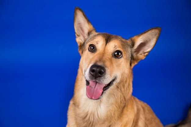 Charismatische rode haren hond zitten en kijken naar camera.