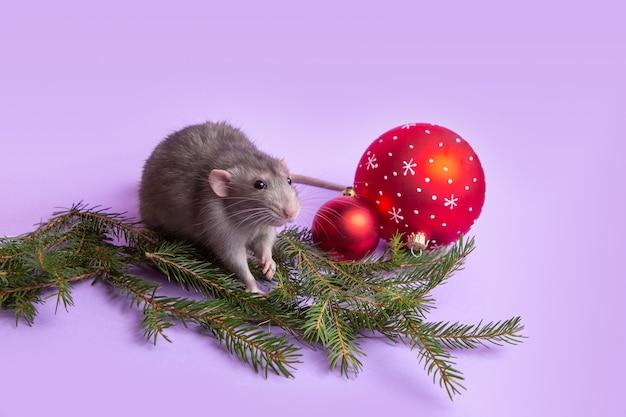 Charmant huisdier. decoratieve rat dumbo op lila muur. kerst speelgoed. 2020 jaar van de rat. chinees nieuwjaar.