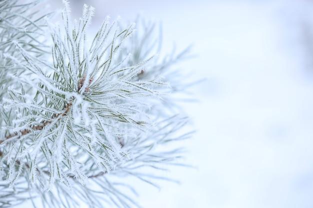 Charmante bevroren takken op een wazige winterachtergrond