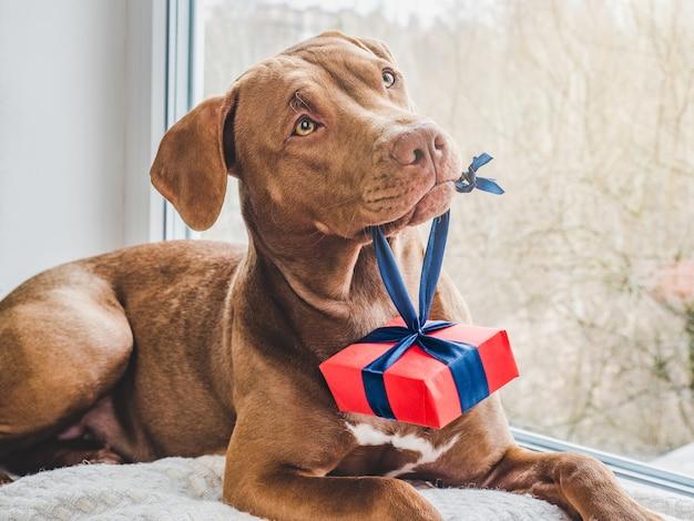 Charmante, mooie puppy van bruine kleur. close-up, binnen. dag licht. concept van zorg, onderwijs, gehoorzaamheidstraining, huisdieren opvoeden