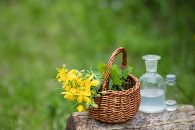 Chelidonium majus gele bloemen in een rieten mand van wijnstokken