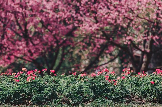 Cherry blossom-bomen en bloemstruiken in de tuin