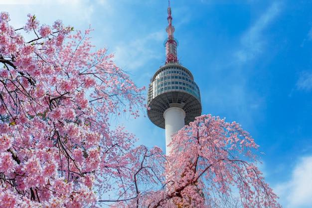 Cherry blossom in het voorjaar bij seoul tower seoul, zuid-korea.