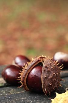 Chestnut die uit zijn schelp