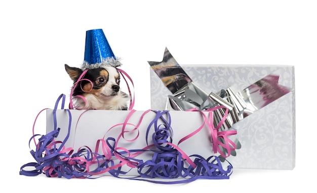 Chihuahua draagt een feestmuts in een huidige doos met slingers