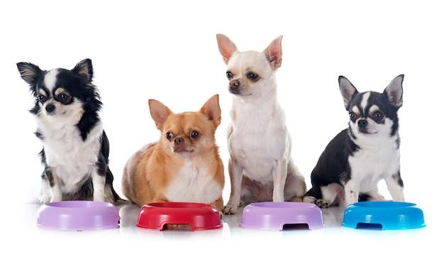 Chihuahua eten