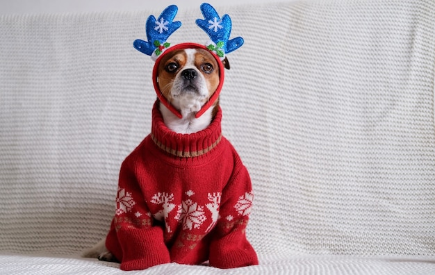 Chihuahua-hond in de rand van hertenhoorn en rode sjaal met kerstcadeau zit op de bus. vrolijk kerstfeest. gelukkig nieuwjaar.