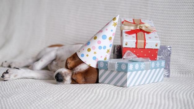 Chihuahua-hond in feestmuts slaapt met kerstcadeaus op de bus. vrolijk kerstfeest. gelukkig nieuwjaar. kerstman hond.
