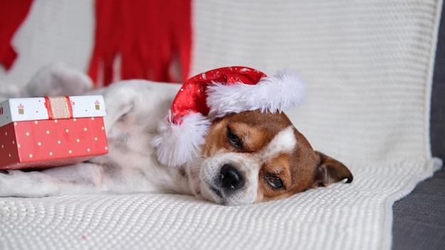 Chihuahua hond in kerstmuts met kerstcadeau liggend op coach. vrolijk kerstfeest. gelukkig nieuwjaar. kerst dromen.