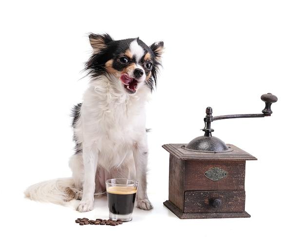 Chihuahua met koffiemolen en koffie espresso op wit