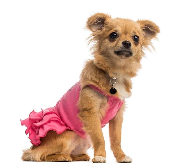 Chihuahua pup draagt een roze shirt