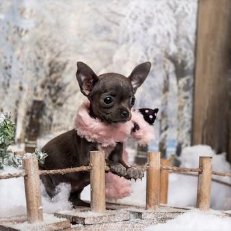 Chihuahua pup met roze sjaal, staande op een brug in een winterlandschap,