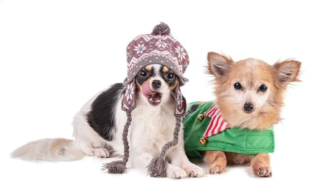 Chihuahua twee gekleed voor kerstmis