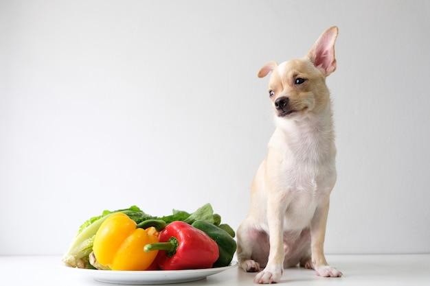 Chihuahua zit op een tafel met een kleurrijke groenteschaal.