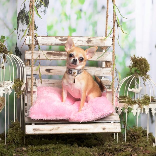 Chihuahua zittend op een roze kussen, in pastorale decoratie