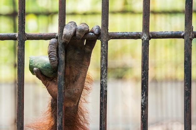 Chimpansee hand.