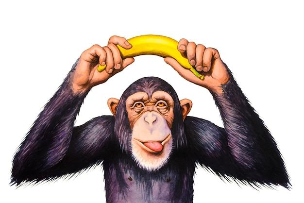 Chimpansee houdt banaan boven zijn hoofd