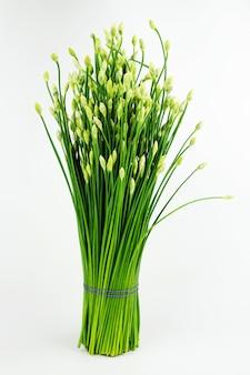 Chinees die bieslook of bieslookbloem op witte achtergrond wordt geïsoleerd