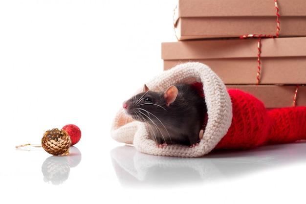 Chinees gelukkig jaar van rat 2020 met donkergrijze rat met nieuwe jaardecoratie
