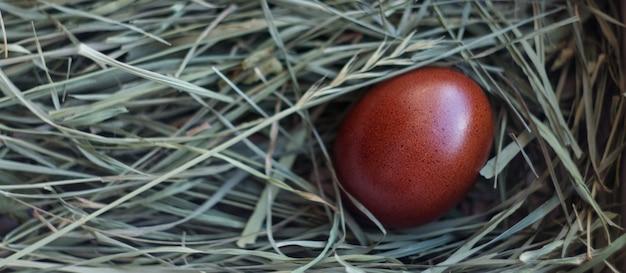 Chocolade-ei ligt in een nest van groen gras