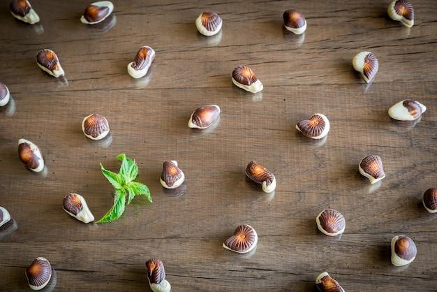 Chocolade met schelpen
