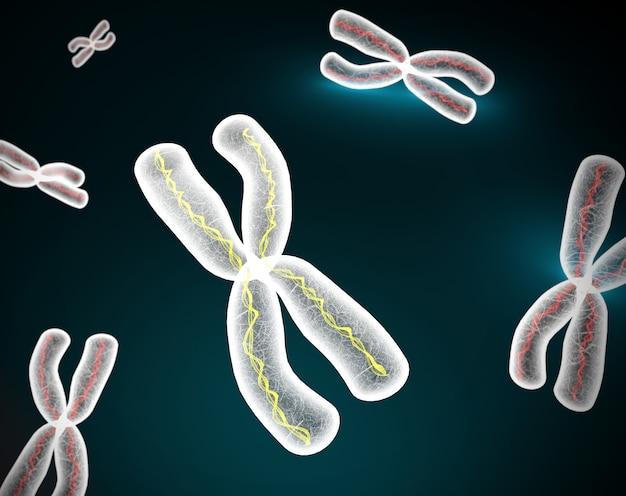 Chromosomen x